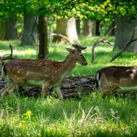 Tiergarten in Hannover