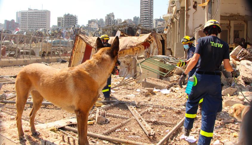 THW Suchhund Beirut