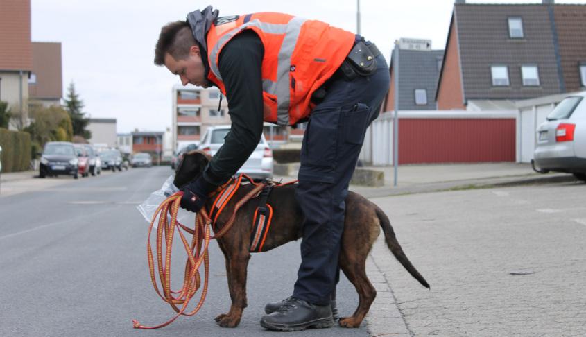 Polizeispürhund Amber