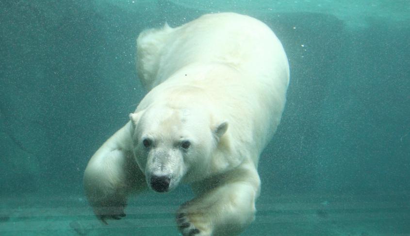Unterwasserwelt Erlebnis Zoo Hannover