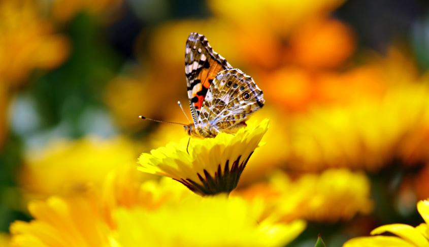 Insekten freuen sich